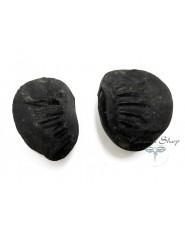 Shaligram fossile
